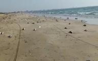 تلف شدن گربه ماهی ها در ساحل جاسک + ویدئو