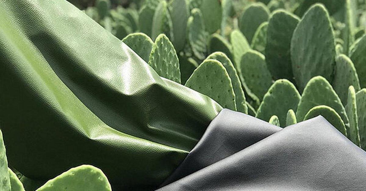 تولید چرم طبیعی از کاکتوس+ عکس