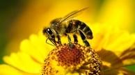 ذراتی که زنبورها را از حشرهکشها مصون میکند