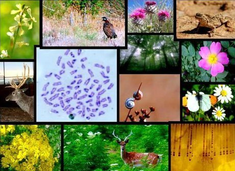 تحریمها مانع استفاده ایران از کمکهای بینالمللی برای ارتقای تنوع زیستی