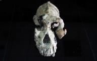 کشف جدیدی از اجداد اسرارآمیز انسان