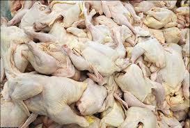 بی توجهی به هشدارها مشکوک است؛ شاید برخی به دنبال واردات مرغ هستند!