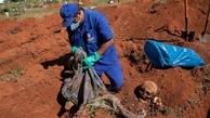 تصاویر|آمار بالای قربانیان کرونا مقامات برزیل را ناچار به نبش قبر کرده