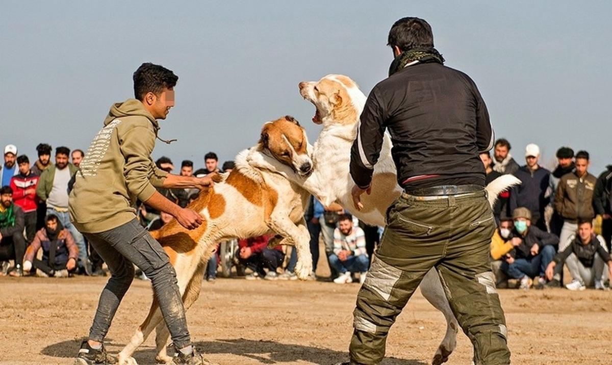 بازداشت عوامل برگزاری جنگ سگها