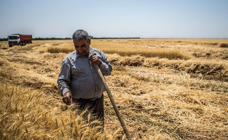 بحران آب، مواد غذایی را گران میکند؟