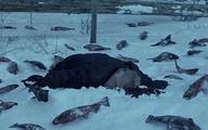 سریال قورباغه از فیلم مگنولیا کپی برداری کرد+عکس  کپی برداری سریال قورباغه در روز روشن!