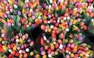 روز ملی گل لاله در هلند