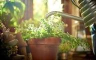 گیاهان آپارتمانی اکسیژن سازِ در دوران نقاهت بیماری کووید-۱۹