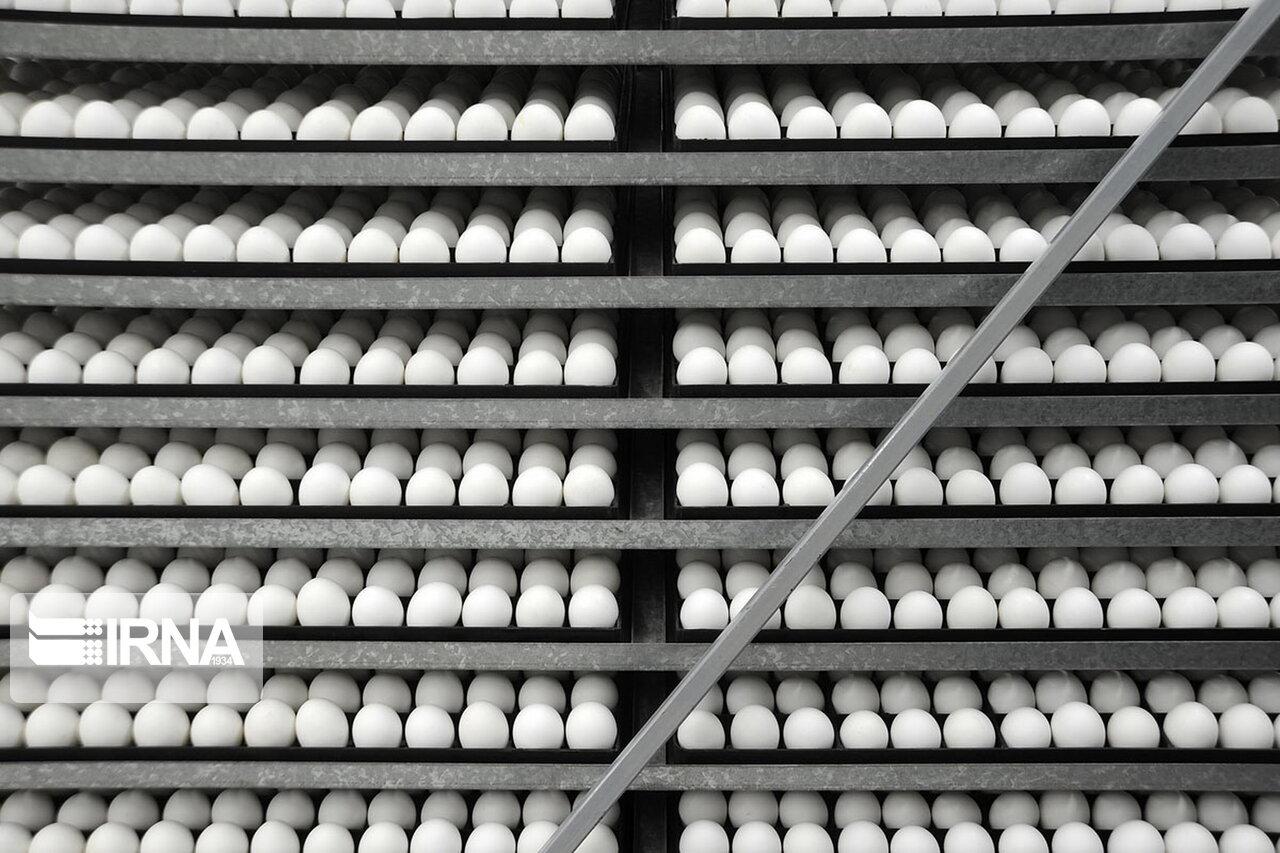 صادرات تخممرغ ممنوع شد