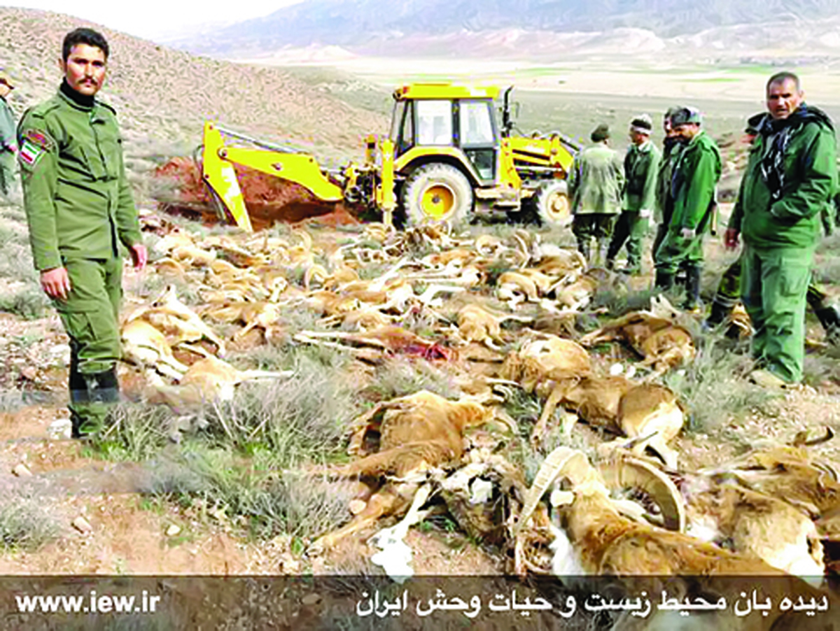 چه کسی قوچهای گلستان را قتل عام کرد؟