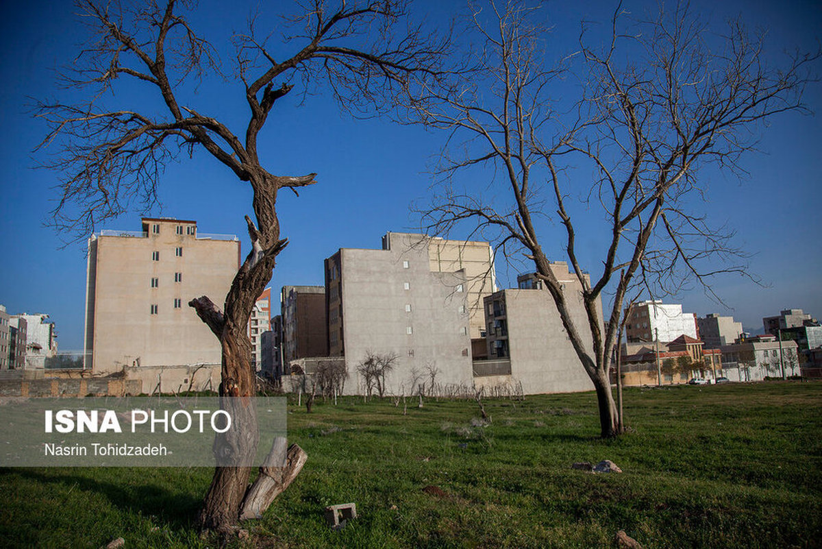 هجوم زمینخواران به درختان «سراب قنبر» کرمانشاه