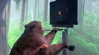تراشه مغزی ساخت شرکت ایلان ماسک یک میمون را قادر به انجام بازی کامپیوتری کرد