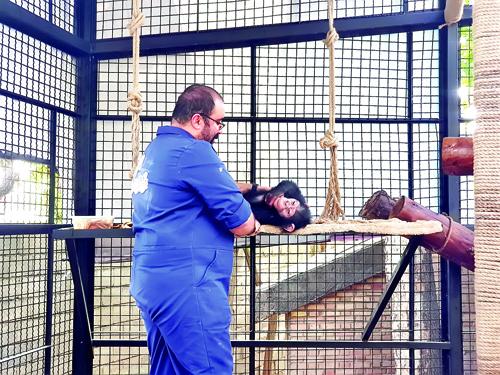 سه ماه زندگی در قفس | دامپزشک همراه یک بچهشامپانزه در جایگاه میمونهای رزوس باغ وحش ارم