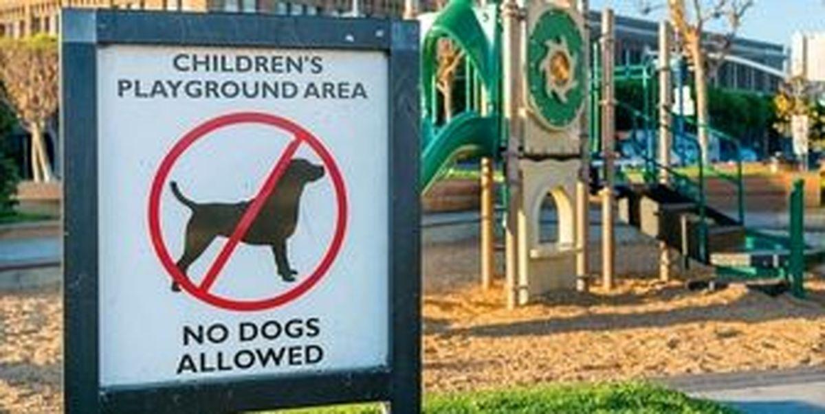 سه دلیل برای ممنوعیت ورود حیوانات به محیط بازی کودکان