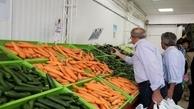 هویج کمیاب شد | مردم انار نخورند!