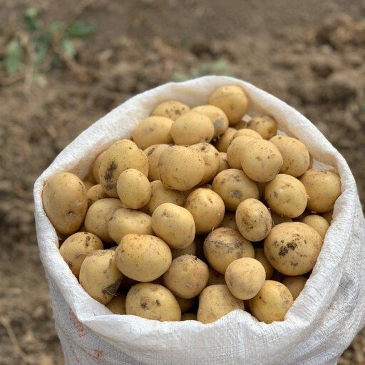 کشف داروی قاچاق در گونی سیبزمینی