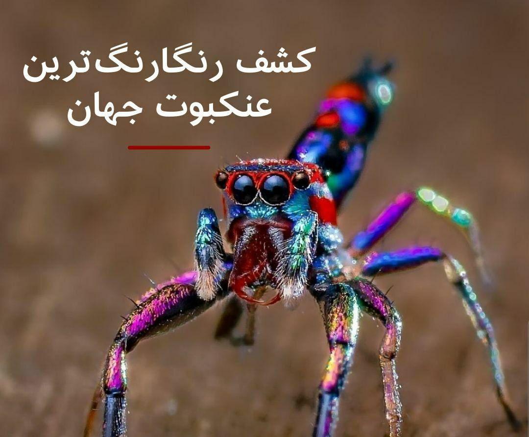کشف  گونه نادر عنکبوتی در کرالا