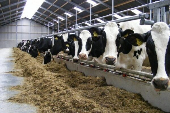 افزایش قیمت شیر خام  احتمالا تا هفته آینده مشخص میشود.