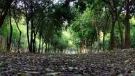 پارک لاله   |  مظنونان حادثه پارک لاله در تهران بازداشت شدند.