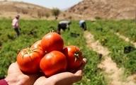 گرانفروشی را پای کشاورزان ننویسید