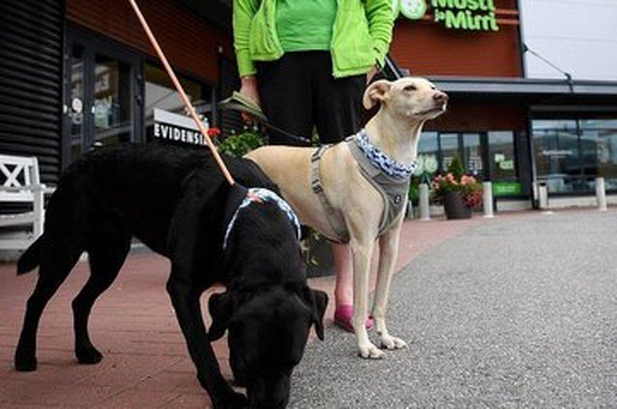تشخیص کرونا با سگهای بویاب