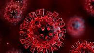 متخصص بیماریهای عفونی: کرونای جدید، محکمتر به سلول تنفسی میچسبد