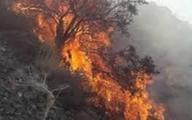 منابع طبیعی فارس:  عمدی بودن آتش سوزی ممسنی