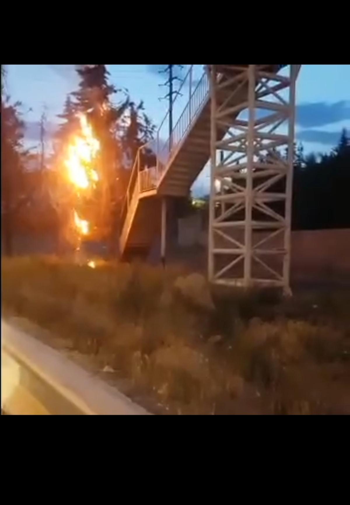 آتش زدن عمدی درختان روبروی دانشگاه آزاد پردیس+فیلم