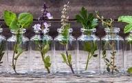 فواید بی شمار پرورش گیاهان