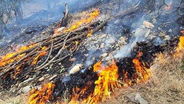 367 میلیارد تومان، میزان خسارت وارد شده به جنگلهای لرستان بر اثر آتشسوزی