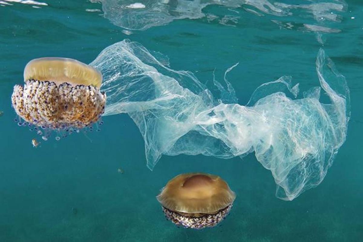 گزارش روند افزایشی آلودگی پلاستیکی در اقیانوسها