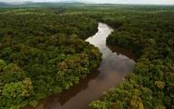 جنگل ها تا چه حد می توانند با تغییرات اقلیمی مبارزه کنند؟