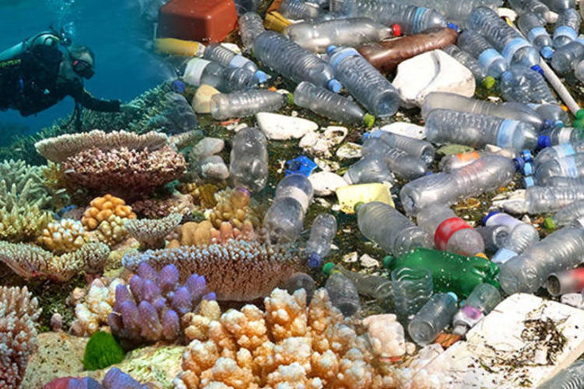 زبالههای پلاستیکی، تهدیدی جدید برای صخرههای مرجانی