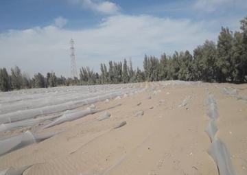 طوفان شن  |   بلایی که کشاورزان رودبار جنوب کرمان را به خاک سیاه نشاند