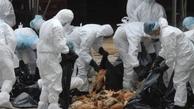 شناسایی 2کانون آنفلوآنزای فوق حاد پرندگان در کردستان