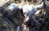 کشف لاشه ۲ توله خرس در زبالهها
