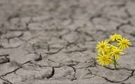 شاخص جهانی امید چیست و چه تصویری از جهان امروز به دست میدهد؟