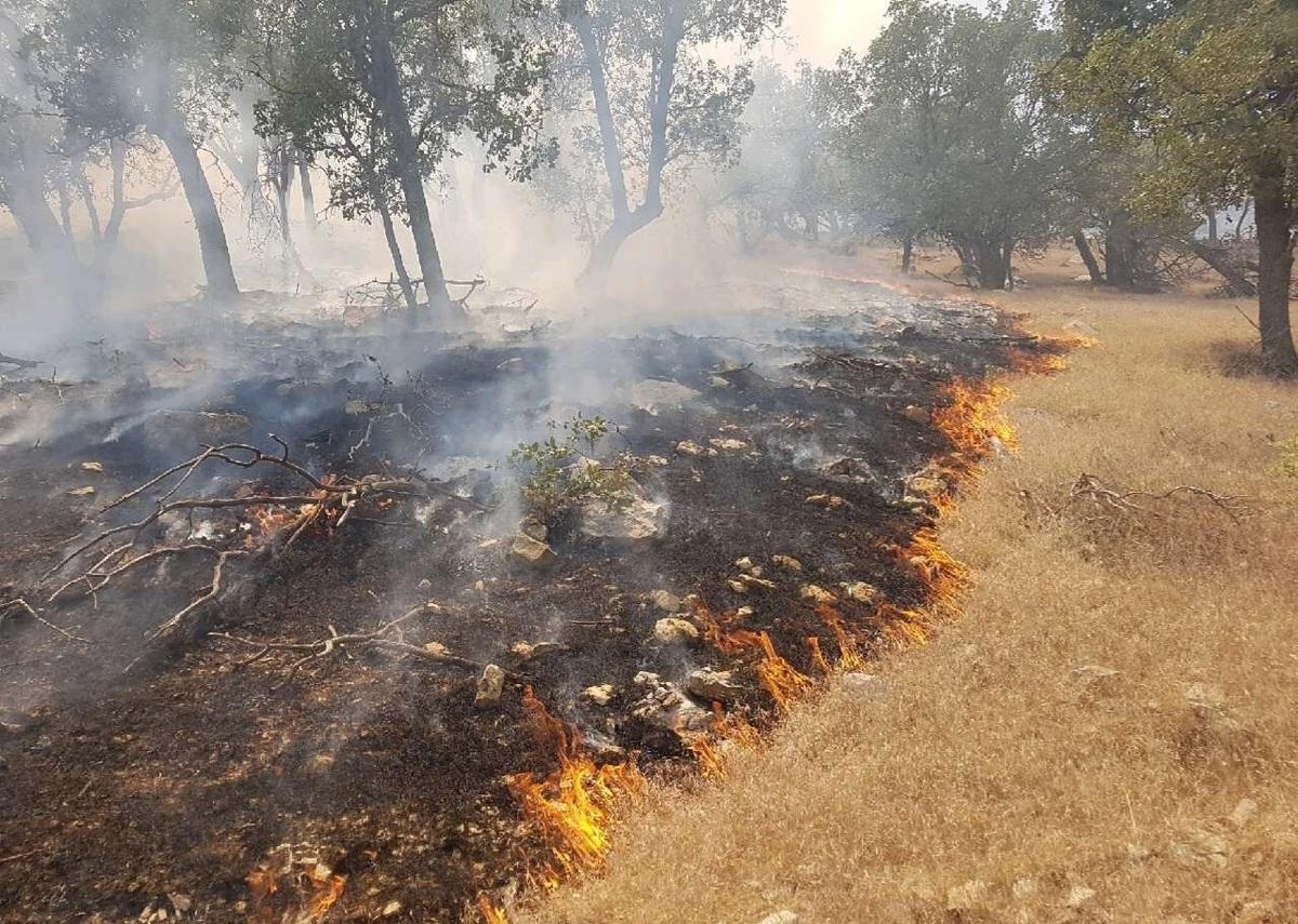۱۷۰ هکتار از جنگلهای دزفول در نیمه دوم خرداد نابودی شدند