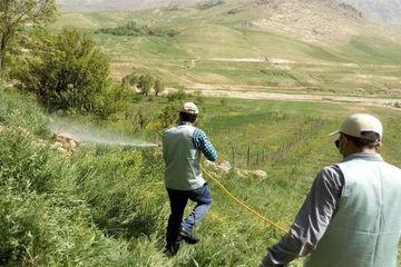 هجوم ملخها به اراضی کشاورزی استان بوشهر تحت کنترل است