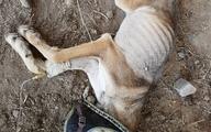 وضعیت دردناک حیوانات باغ وحش صفادشت/ پول بدهید، لمس کنید! + عکس
