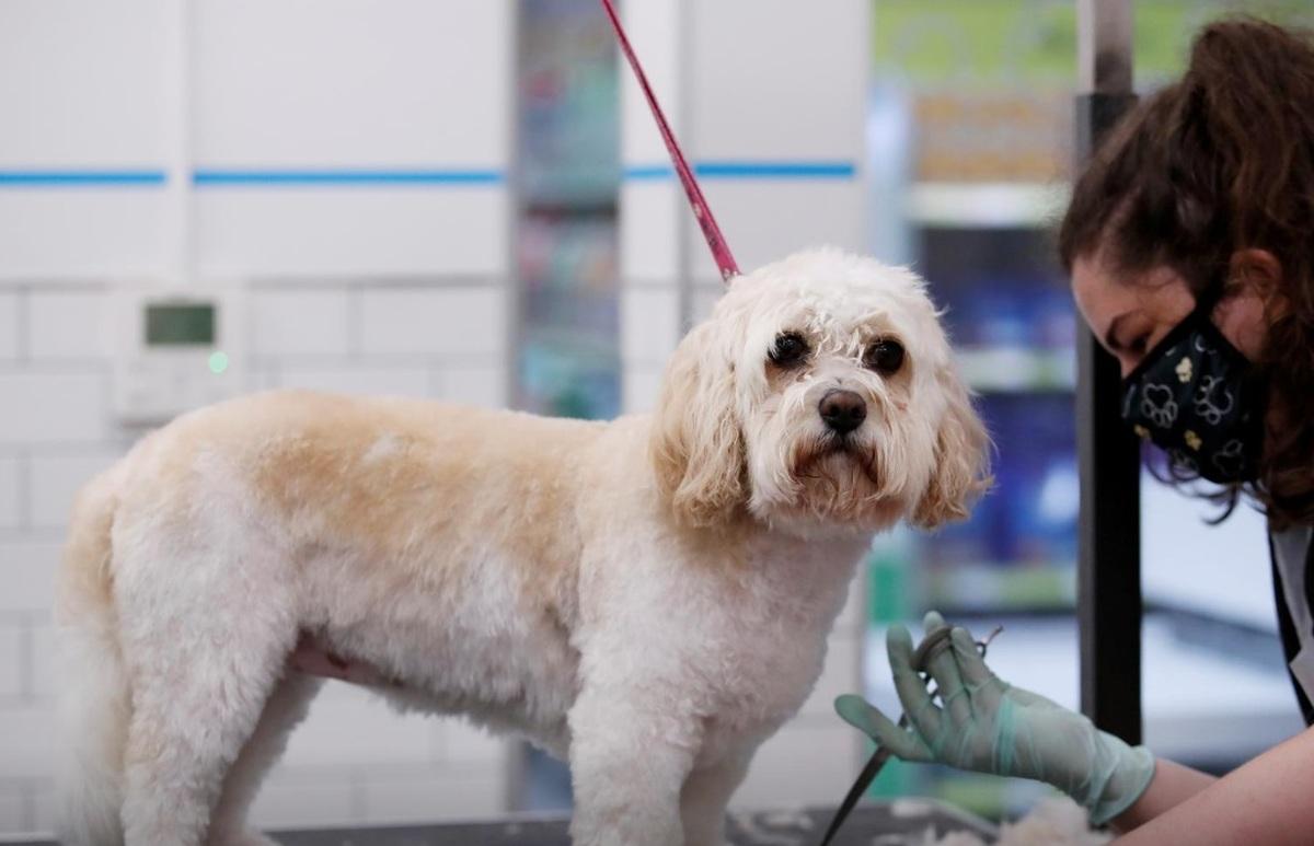 پس از برگزیت  |   گذرنامه اروپایی حیوانات خانگی بریتانیا لغو میشود