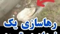 فیلم تلخ از نوزاد رهاشده تبریزی کنار سطل زباله + ویدئو