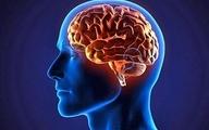 مغز شکلپذیر ما