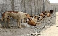 سگهای سرگردان دغدغه بوشهریها