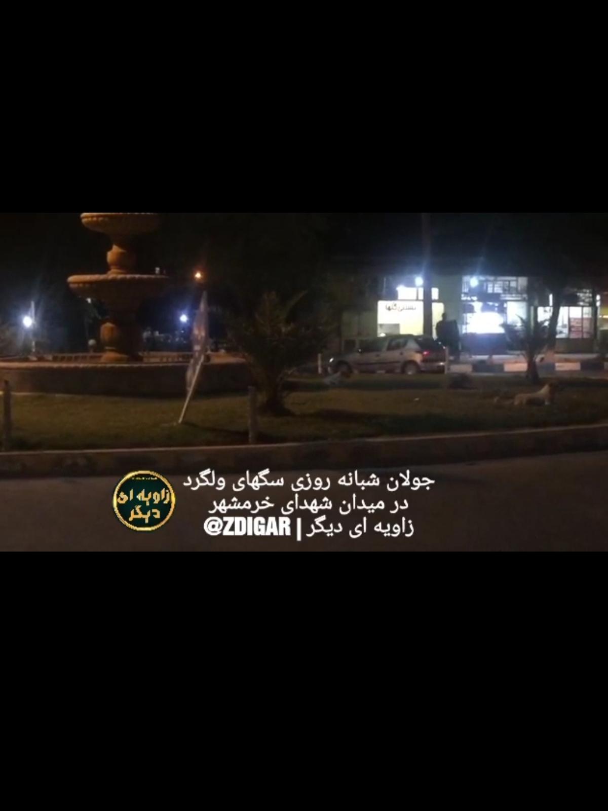 جولان سگهای ولگرد در خرمشهر + ویدئو