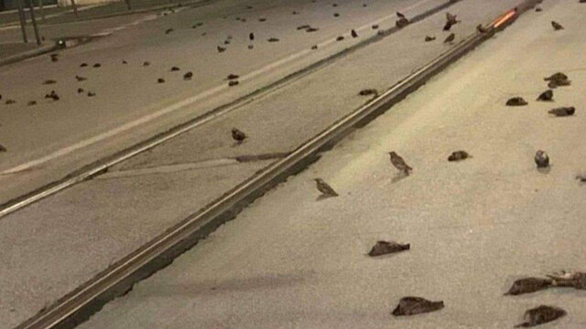 آتش بازی شب سال نو میلادی عامل تلف شدن صدها پرنده در ایتالیا