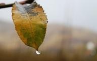 آبان امسال بسیار خشک و کم بارش خواهد بود