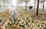 شناسایی آنفلوآنزای فوق حاد پرندگان در خراسان جنوبی