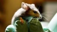 دانشمندان آلمانی موشهای دچار فلج حرکتی را درمان کردند