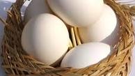 علت اصلی افزایش قیمت تخم مرغ مشخص شد .